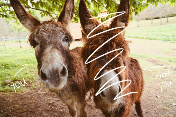 Avoid being a donkey (but also be a donkey)
